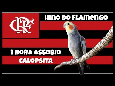 ASSOBIO CALOPSITA - HINO DO FLAMENGO