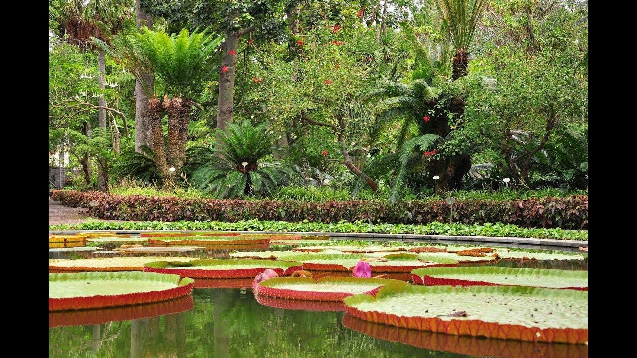 Jard n bot nico puerto de la cruz tenerife youtube - Botanical garden puerto de la cruz ...