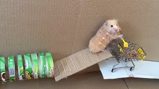 LONG Hamster Obstacle Course with Maze 🐹