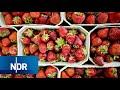 Erdbeeren: Sorten, Anbau und Ernte   Doku   NDR   45 Min MP3