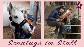 Mein Sonntag mit ALLEN Pferden I Traktor fahren und Wölbchen besuchen I Ein Tag im Stall FMA
