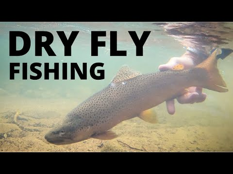 DRY FLY BONANZA! (fly Fishing)