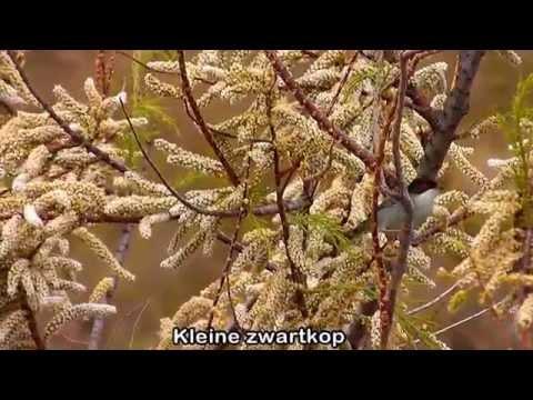 Birds of    El Hondo omgev  Elche  Spanje