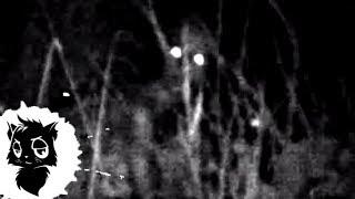 5 РЕАЛЬНЫХ ЛЕШИХ СНЯТЫХ НА КАМЕРУ [Черный кот]