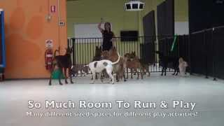 Alpha Doggy Playcare Play & Socialisation