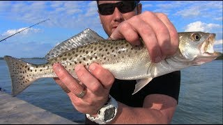 Easy Way to Catch (Spotted Sea Trout) in Florida Spotted Seatrout