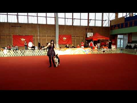 Izzy és Anikó I. Valentin Dog Dancing Kupa 2014.02.14.