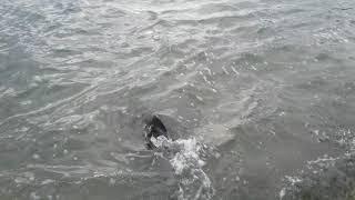 full dolphin at coast guard point gulfport florida 4 22 2018