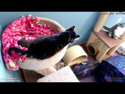 Guardian Kittens - Fuzzy Blanket Monsters