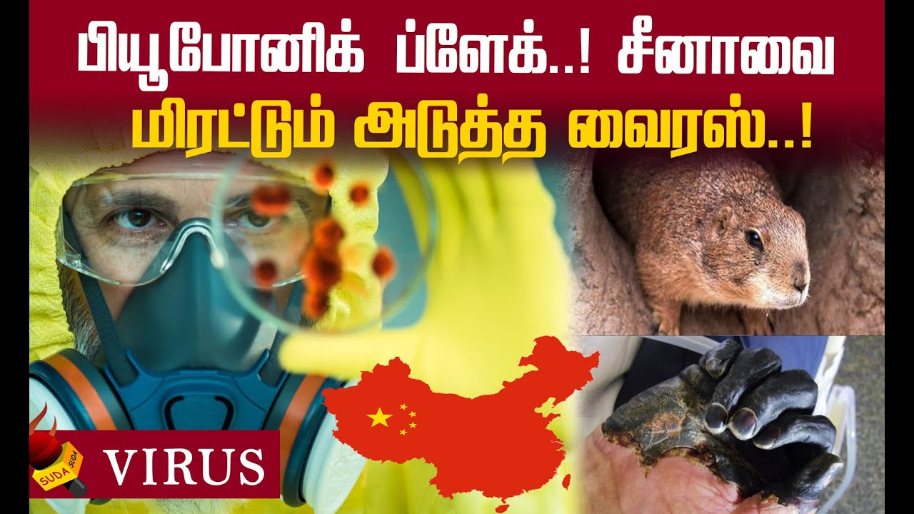 Bubonic Plague : 2020 முடியும்வரை சீனாவில் நோய் எச்சரிக்கை ...