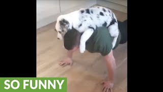 """Puppy """"helps"""" owner with his push-up routine"""