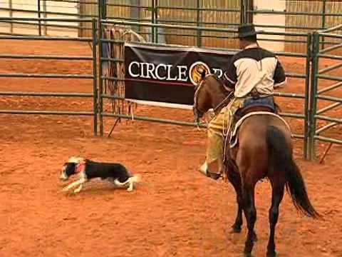 Training the Stock Dog