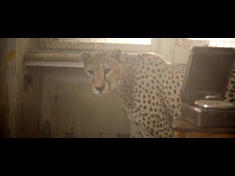 Ektor - Proč (OFFICIAL VIDEO)