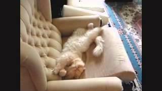 Смешные кошки. Подборка #10
