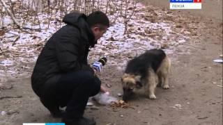 В Пензе открыт временный приют для бездомных животных