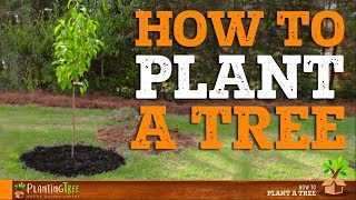 How To Plant A Tree | PlantingTree™