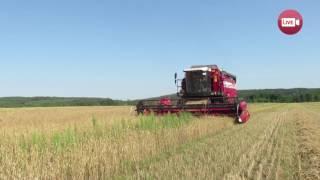 Колхоз-банкрот вырастил рекордный урожай (Деревная, Слонимский район, 2017)