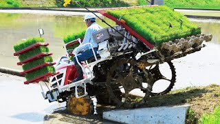 Wow! Amazing Modern Asia Agriculture Technology - Wet Rice From Seed To Harvest Process