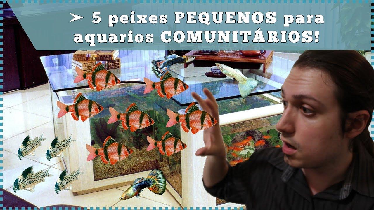 5 peixes PEQUENOS para aquários COMUNITÁRIOS!