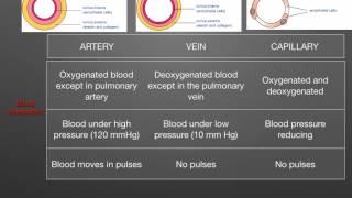 AS level. G.1. Arteries, veins, capillaries (Ms Cooper)