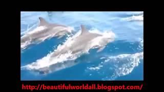 Kalpitiya Dolphins Watching - Sri Lanka