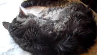 Waking a Deaf Cat
