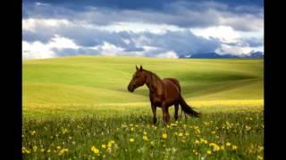 Очень красивая казахская народная песня «Гаухар-тас». Природа Казахстана.  Поет Русакова Татьяна.