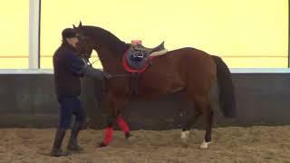 Выездка лошади. Работа в руках. Качели в руках.