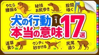 ❤️犬の行動・しぐさの本当の意味 17選【Part.1】
