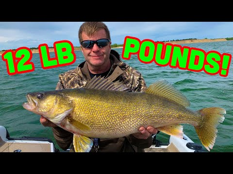 Lake McConaughy | 26 FISH In 9 MINUTES! *CRAZY WALLEYE/WIPER Fishing*