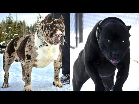 the-most-dreadful-5-dog-breeds