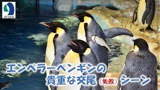 名古屋港水族館のペンギン水槽にはペンギンの観察・記録用にカメラが設...