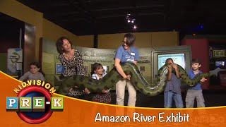 Kidvision Vpk Amazon River Exhibit Field Trip