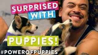 Can Puppies Fix Boredom? #PowerofPuppies