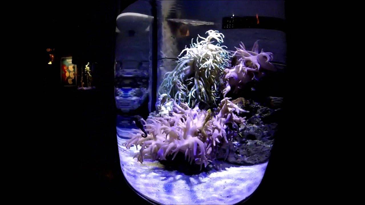 Sea Life Aquarium Mall of America - YouTube