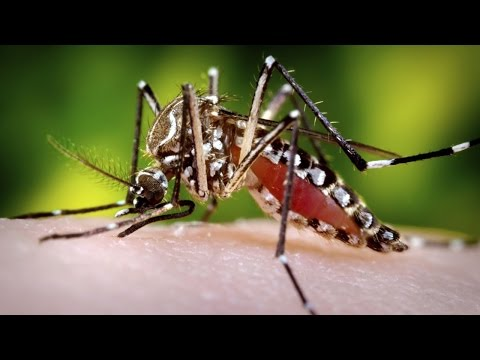 Zika Virus: What You Need to Know - AMNH SciCafe Special Event