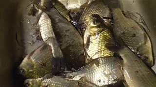 Рыбалка в Карасуке