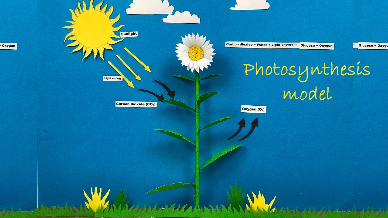 Diagram Photosynthesis