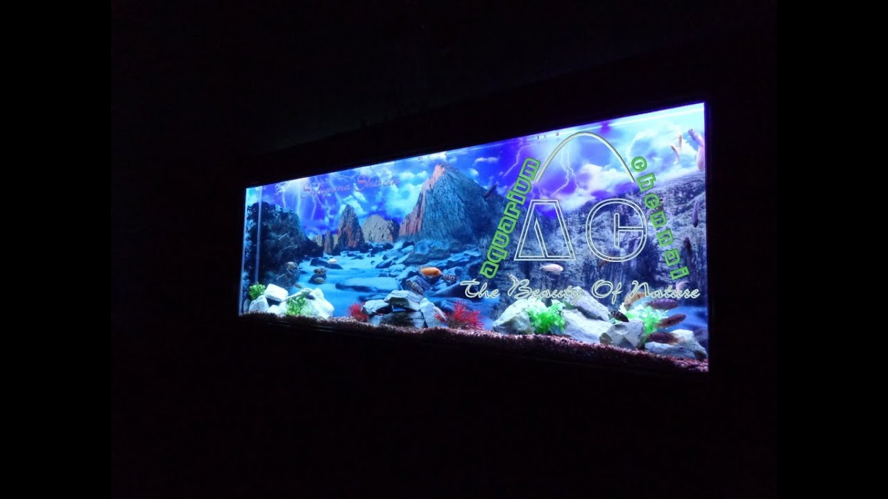 Aquarium fish tank in chennai - Discus Fish In Plasma Aquarium Designed By Mazhar 91 9094959626 Aquarium Chennai