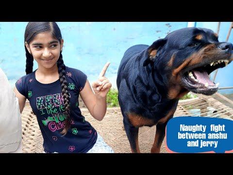 anshu is irritating jerry||funniest  dog||funny dog videos||cute dog.