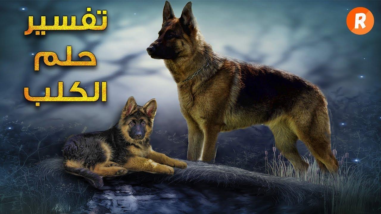 تفسير حلم الكلب في المنام - ماذا يعني الكلب في الحلم ؟ سلسلة تفسير الأحلام