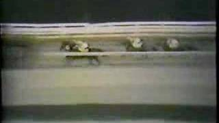 Native Dancer - 1953 Travers Stakes
