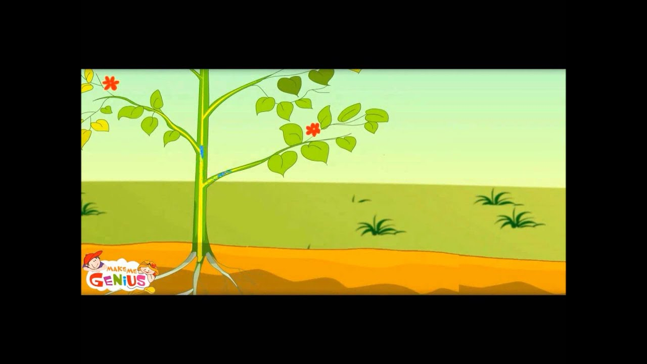 What Is Photosynthesis In Plants Class 3rd Class 4 Grade
