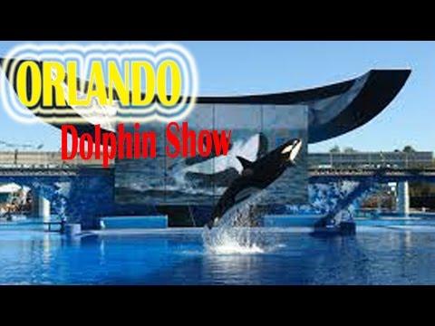 Visit Seaworld Orlando Dolphin Show 2016   California Travel Destinations & Attractions