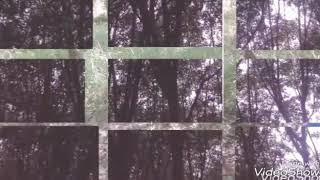 เพลงมหาลัยในป่ายาง(cover mvม.5/5)