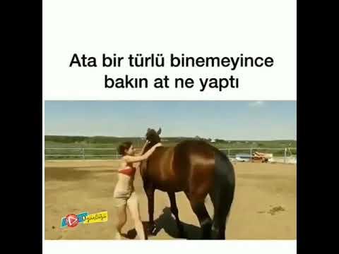kadın köpek at eşek sikişi Porno Sikiş izle Boşal