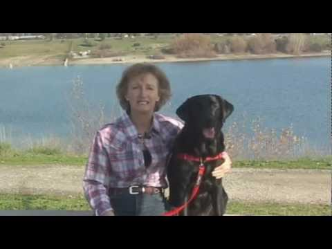 Introduction to the SENSE-ation ® & SENSE-ible ® Dog Harnesses