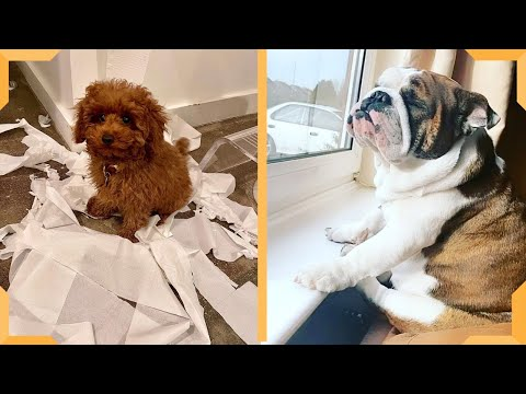 Dogs In Quarantine Compilation Video | Funny Dog | Try Not To Laugh!