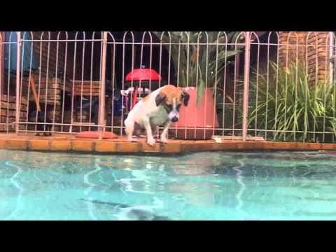 Zak catch Catfish in pool...