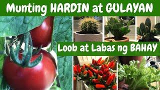 """Munting HARDIN at GULAYAN!!! sa Loob at Labas ng Bahay. """"GARDENING"""""""